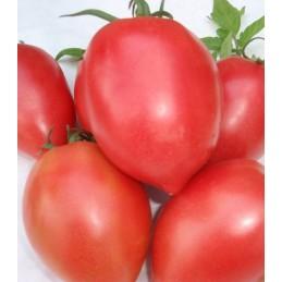 RUGBY F1 - 1000 Semințe tomate Bulgaria