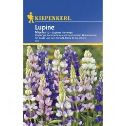 LUPIN - 40 Seminte