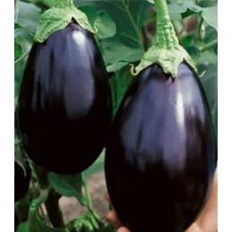 BLACK BEAUTY - 50g Seminte...
