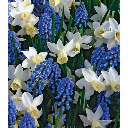MIX BLUE AND WHITE PASSION,...