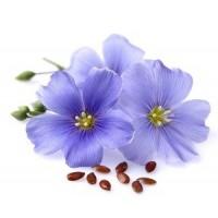 Semințe flori Hobby